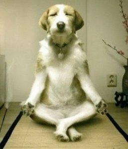 meditativedog