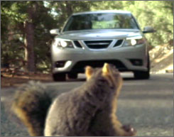 car and squi